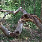 Fallen Limb by GP1746