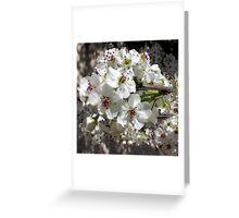 Gleaming White Blooms Greeting Card
