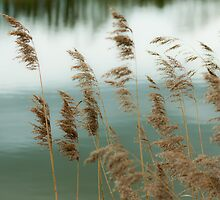 Reeds Coloured by redfibres