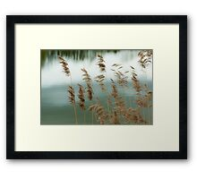 Reeds Coloured Framed Print