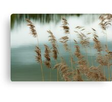 Reeds Coloured Canvas Print