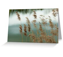 Reeds Coloured Greeting Card