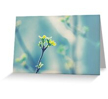 First signs of spring... Greeting Card