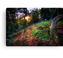 Bluebell Sunset Canvas Print
