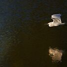 Into the Light - Snowy Egret by Jim Cumming