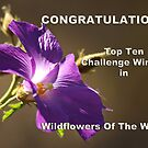 Wildflowers Of The World Banner Entry by Eve Parry