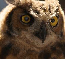 Owl Headshot by TedStephens