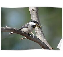 Gathering The Nesting Material Poster