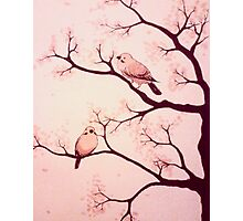 Cherry blossom birds Photographic Print