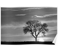 Sunrise Silhouette Black and White Poster