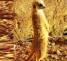 Meerkat standing by Extreme-Fantasy