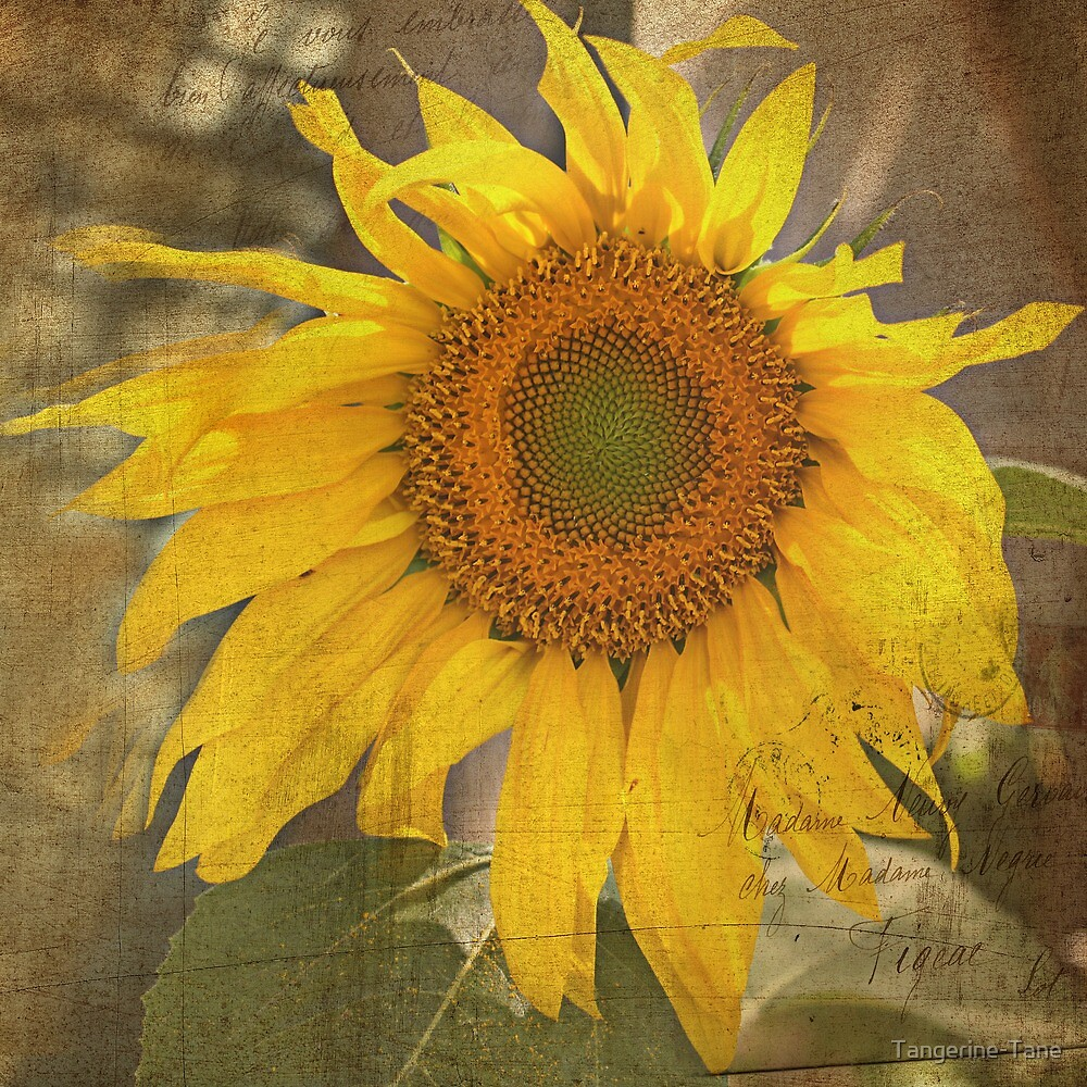 Love Sunflowers by Tangerine-Tane