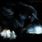 When I look into an old dogs eyes I see wisdom and dignity and often gratitude. by Laura-Lise Wong