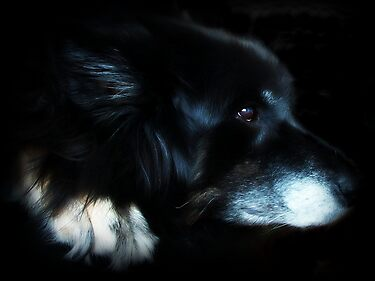 When I look into an old dogs' eyes I see wisdom and dignity and often gratitude. by Laura-Lise Wong