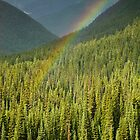 Rainbow and Sunlit Trees by Jeff Goulden