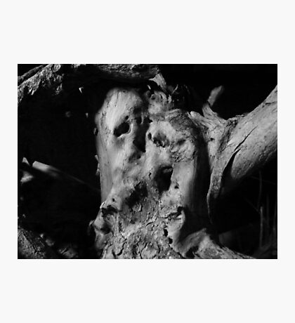 The Apophenically Smiling Wood Lovers Photographic Print