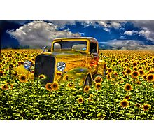 Yellow fields of happiness Photographic Print