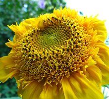 Sunflower Soliloquy by MarianBendeth