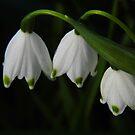 Springtime Snowflakes by WildestArt