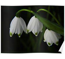 Springtime Snowflakes Poster
