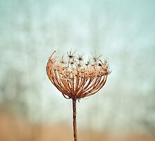 withered. by Shane Rounce