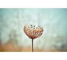 withered. Photographic Print