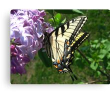 Eastern Tiger Swallowtail on Lilacs Canvas Print