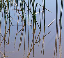Reed reflections 1 by Antonia  Valentine