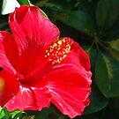 Spanish Red, The Flower, Spain 2007 by ArleneMartine