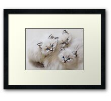 Baby Faces Framed Print
