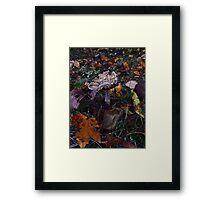 Mushroom Kingdom (3919) Framed Print