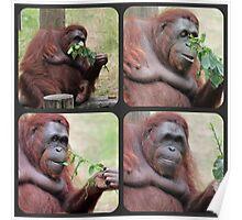 Orangutan Collage Poster