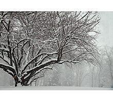 Winter's Wild Play Photographic Print
