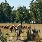 Gaucho Herding on Horse by photograham
