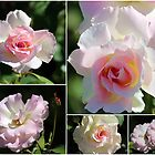 Olde Worlde Roses by alycanon
