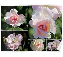 Olde Worlde Roses Poster