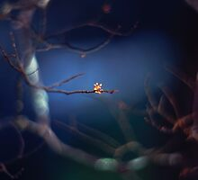 The mysterious little bud by Mel Brackstone