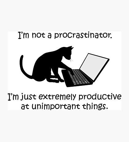 I'm Not a Procrastinator - Cat Photographic Print