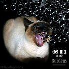 Get Rid Of The Burdens by Hapatography