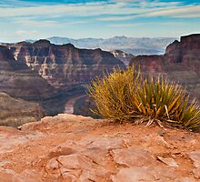 Green Life in the Grand Canyon by desireephoto