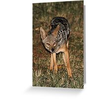 Side-striped Jackal at Night Greeting Card