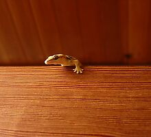 Gecko Watching The House by Hapatography