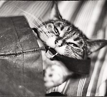 """""""Get Me Outta Here!"""" by montserrat"""