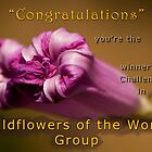 Wildflowers of the World Group by César Torres