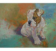 Bulldog Puppy Photographic Print