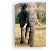 Bull Elephant In Full Musth Canvas Print
