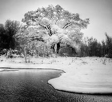 Winters Tree by Bob Larson
