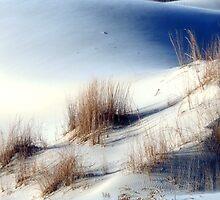 Monahans White Sand Hills ~ Desert Life ~5 by Carla Jensen
