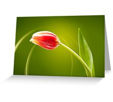 Tulip in rays of light Greeting Card