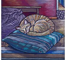 cat on a cushion  Photographic Print